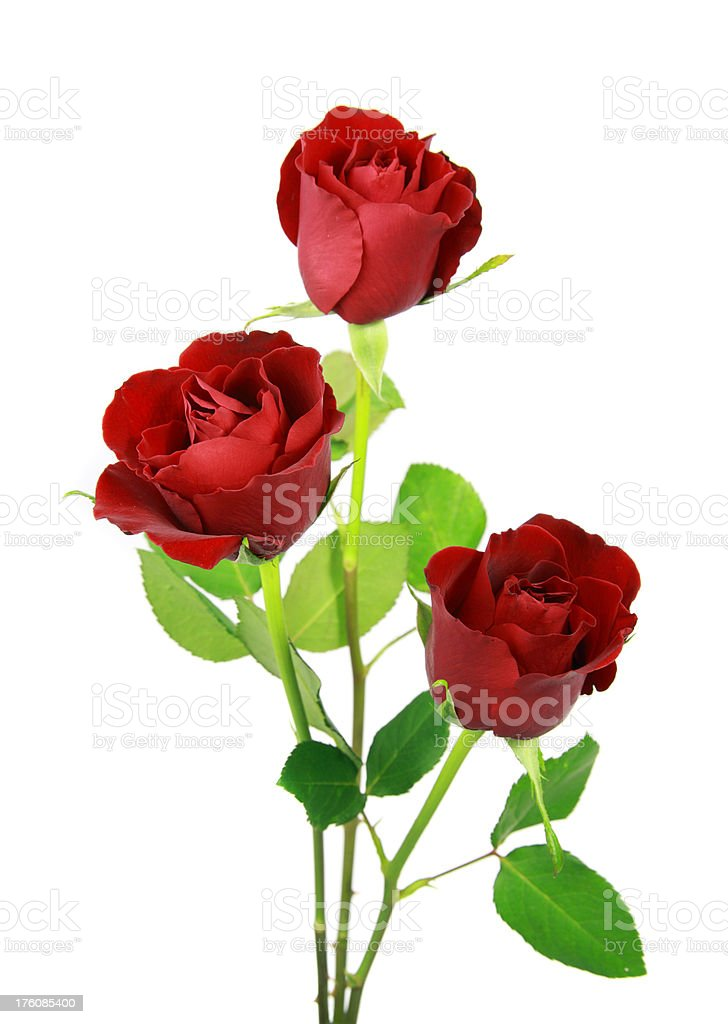 Three upright red roses isolated on white, ideal for valentines. stock photo