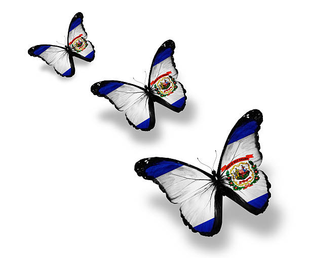 Three West Virginia flag butterflies, isolated on white Three West Virginia flag butterflies, isolated on white west virginia us state stock pictures, royalty-free photos & images