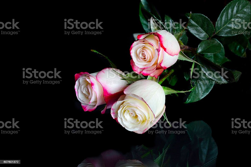 Three white roses with pink edges of petals on black stock photo bouquet flower rose flower adult affectionate three white roses with pink edges mightylinksfo