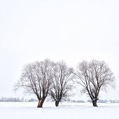 The Saxon landscape lies deep in snow.  three leafless willow trees stand in the middle of a field. Outlines of a village can be seen in the background.
