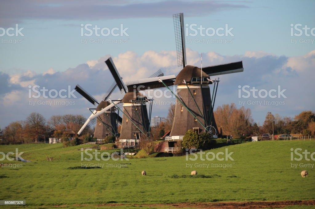 Drie windmolens in de Driemanspolder bij Stompwijk Nederland foto