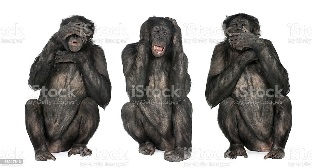 Three Wise Monkeys : Chimpanzee stock photo