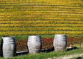 Three wooden wine barrels in front of colored vineyards in an autumn sunny day