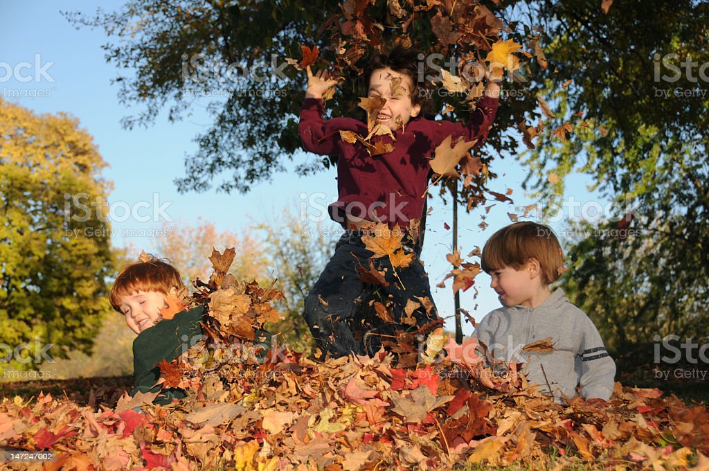 Three young boys playing in a pile of autumn leaves stock photo