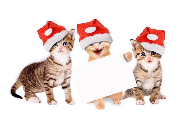 Three young cats with christmas hats and banners picture id490749730?b=1&k=6&m=490749730&s=612x612&w=0&h=yeon6ozxeyagwd m3ze5snknbhoz wxg4a4z wazgd0=