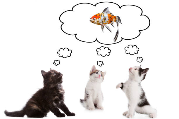 Three young kitten dreaming about fish picture id854855146?b=1&k=6&m=854855146&s=612x612&w=0&h=ni5p7wqkhjuybgwv3qj9srrvhul tfbjvuuvbylxnik=