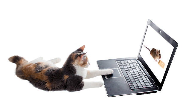 Threecolored kitten lying lazily around a laptop and plays the picture id185651240?b=1&k=6&m=185651240&s=612x612&w=0&h=qyjyrfw18wha nkhmo3armai6xvmijw 57 6 l717vs=