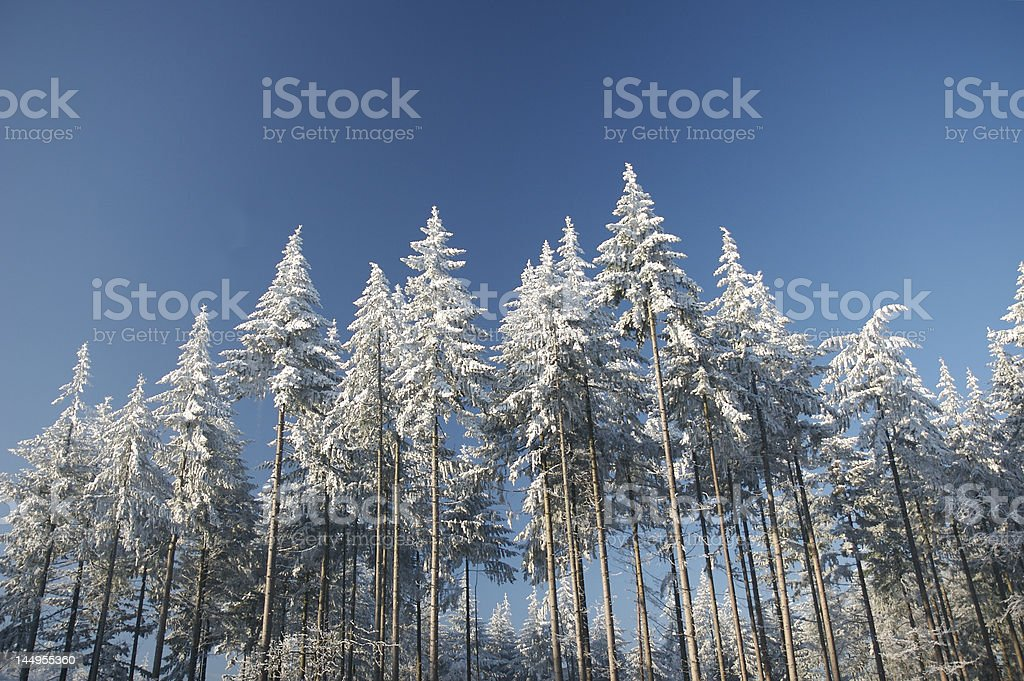 Three's in wintertime stock photo
