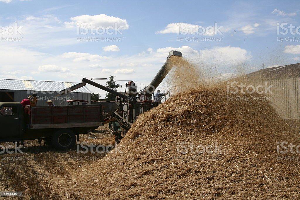 Threshing and Grain in Truck royalty-free stock photo