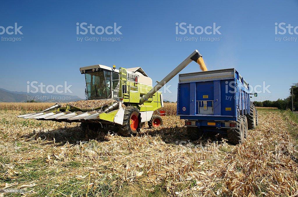 threshing of corn stock photo