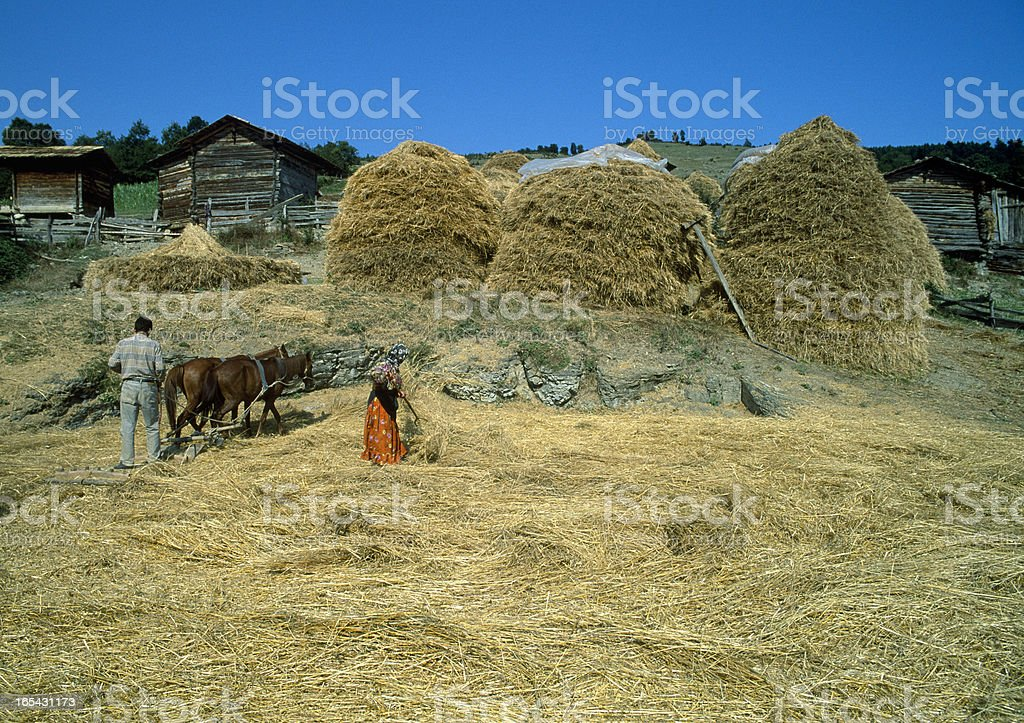 threshing stock photo
