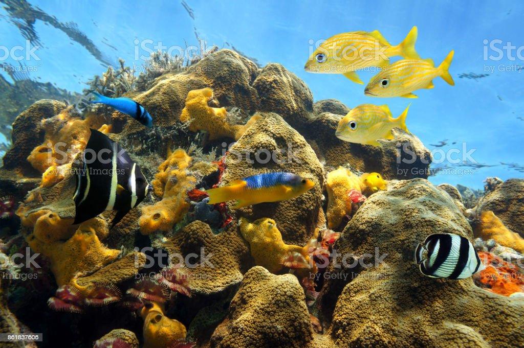 Animada vida marina en los arrecifes de coral - foto de stock
