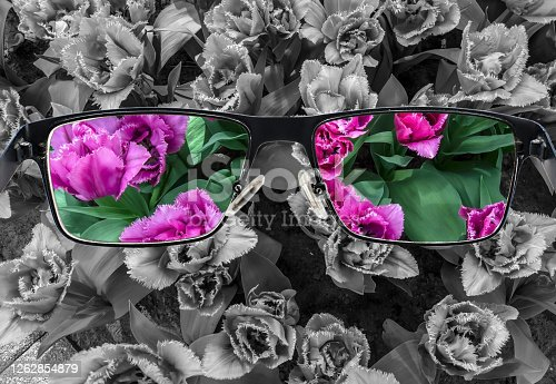 Through glasses frame. Colorful view of pink tulips in glasses and monochrome background. Different world perception. Optimism, hopefulness, mental health concept.