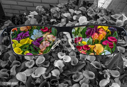 Through glasses frame. View of colorful calla lilies in glasses and monochrome background. Different world perception. Optimism, hopefulness, mental health concept.