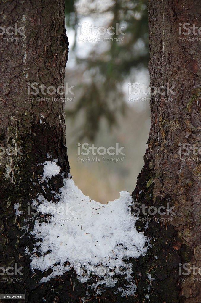 A través de nieve y madera foto de stock libre de derechos