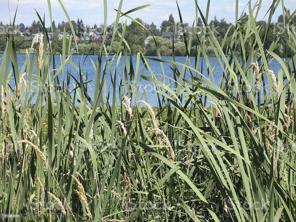 Through tall grass royalty-free stock photo