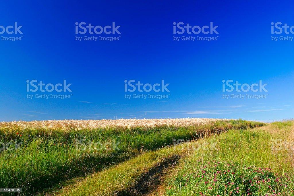 Through the Fields royalty-free stock photo