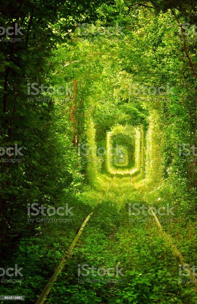 Through the green corridor stock photo