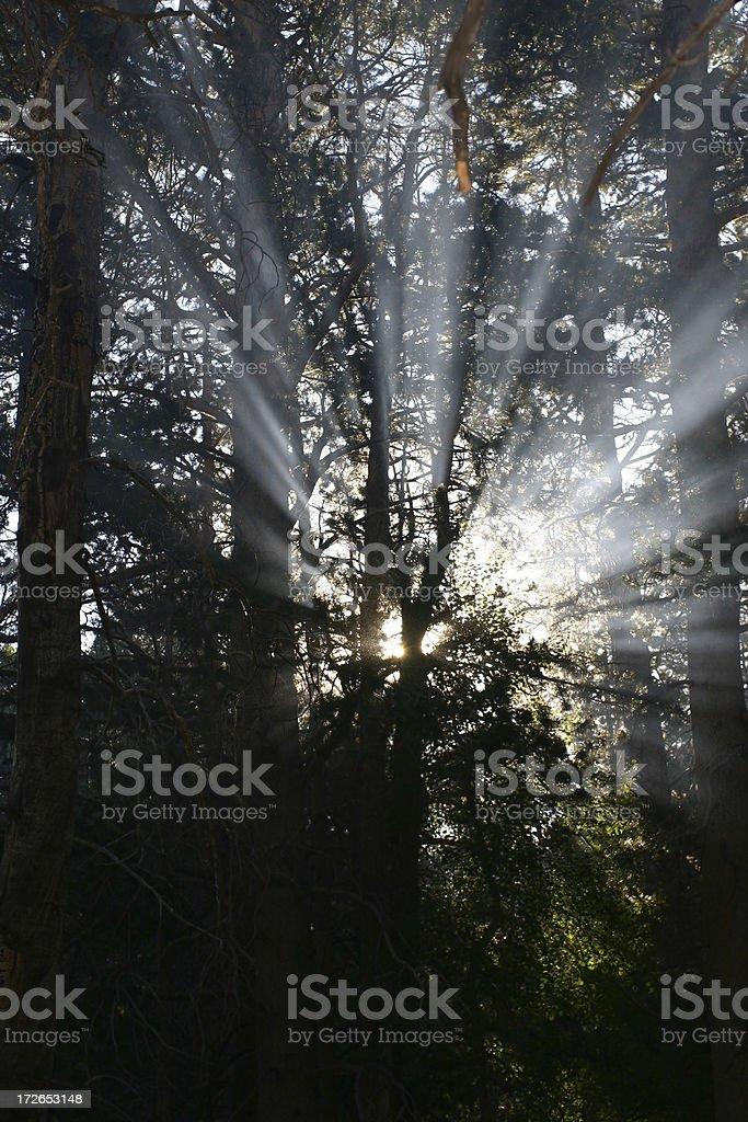 Through the Trees 3 royalty-free stock photo