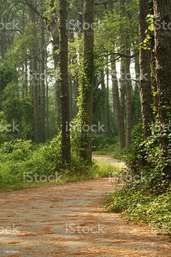 Through the Woods royalty-free stock photo