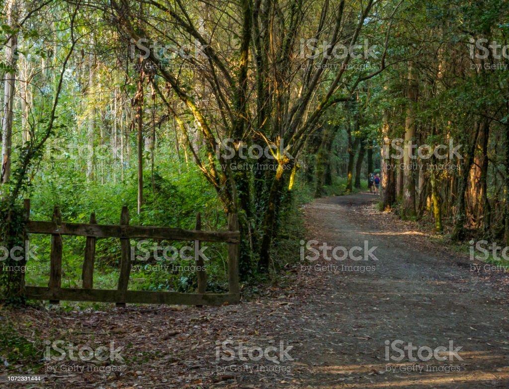 Through the woods - San Anton stock photo