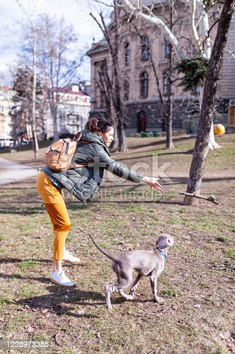 Young woman throwing a wooden stick for her Weimar puppy in the park to fetch and retrieve, time of COVID-19 curfew waver