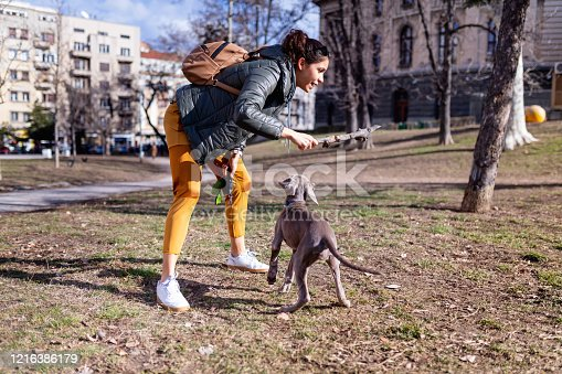 Young female owner of Weimaraner puppy in park throwing a wooden stick to her dog to play fetch, curfew waiver in time of COVID-19