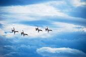 Thunderbirds at an airshow.