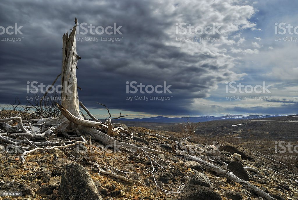 Thundercloud above a dead forest royalty-free stock photo