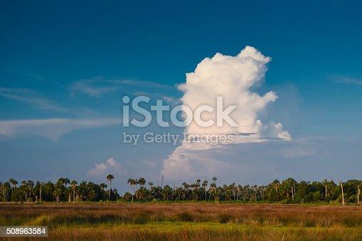 An afternoon thunderstorm brews over sabal palms and salt marsh wetlands near Crystal River, Florida.