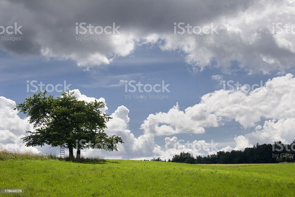 Thunderclouds over Tree royalty-free stock photo
