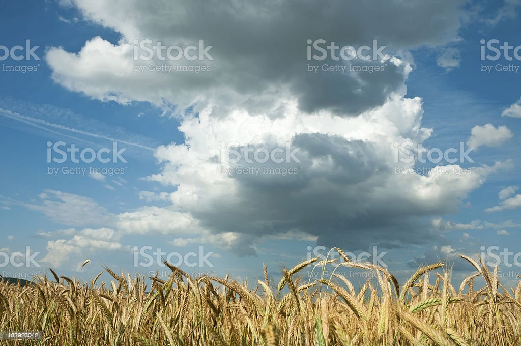 thunderclounds over rye field - agriculture landscape stock photo