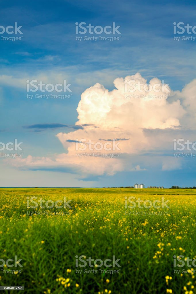 Thunderstorm Cloud Above a Canola Field stock photo