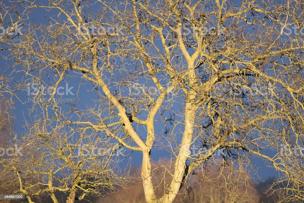 Gewitterfront mit kahlen Bäumen stock photo