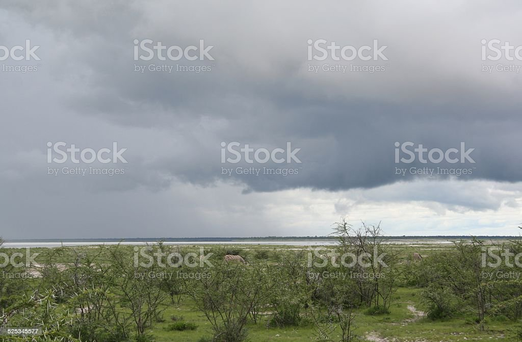 Thunderstorm in Etosha NP, Green Landscape, Wet Season, Twilight, Namibia stock photo