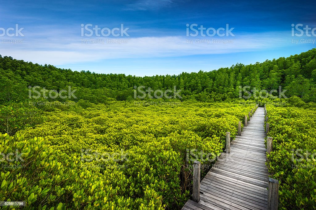 Thung Prong Thong forest Rayong stock photo
