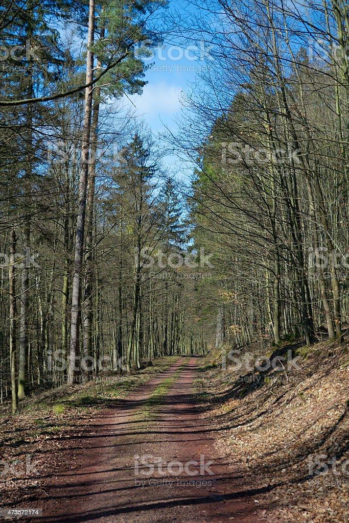 Bosque De Turingia Alemania Foto De Stock Y Mas Banco De Imagenes De 2015 Istock