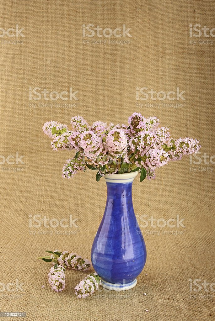 Thyme bunch in blue vase royalty-free stock photo