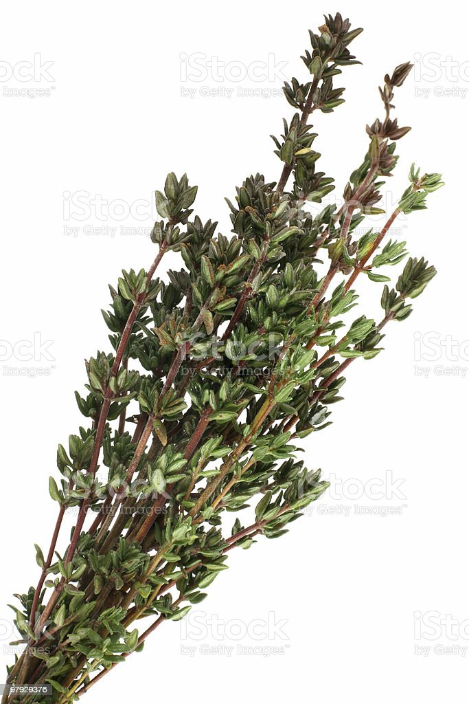 Thyme bunch royalty-free stock photo