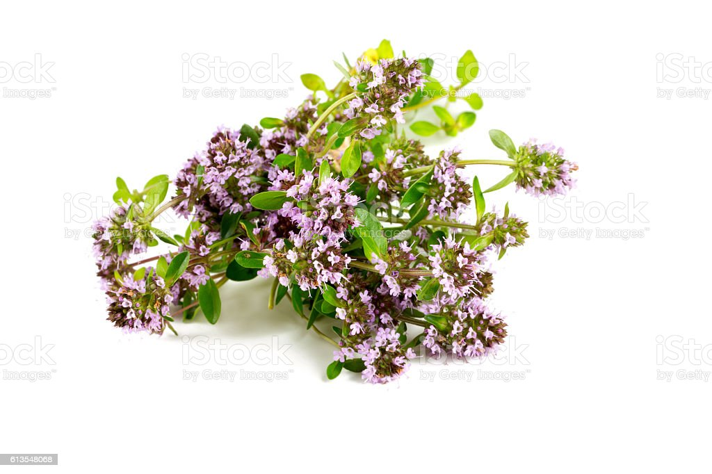 thyme flowers isolated on white stock photo