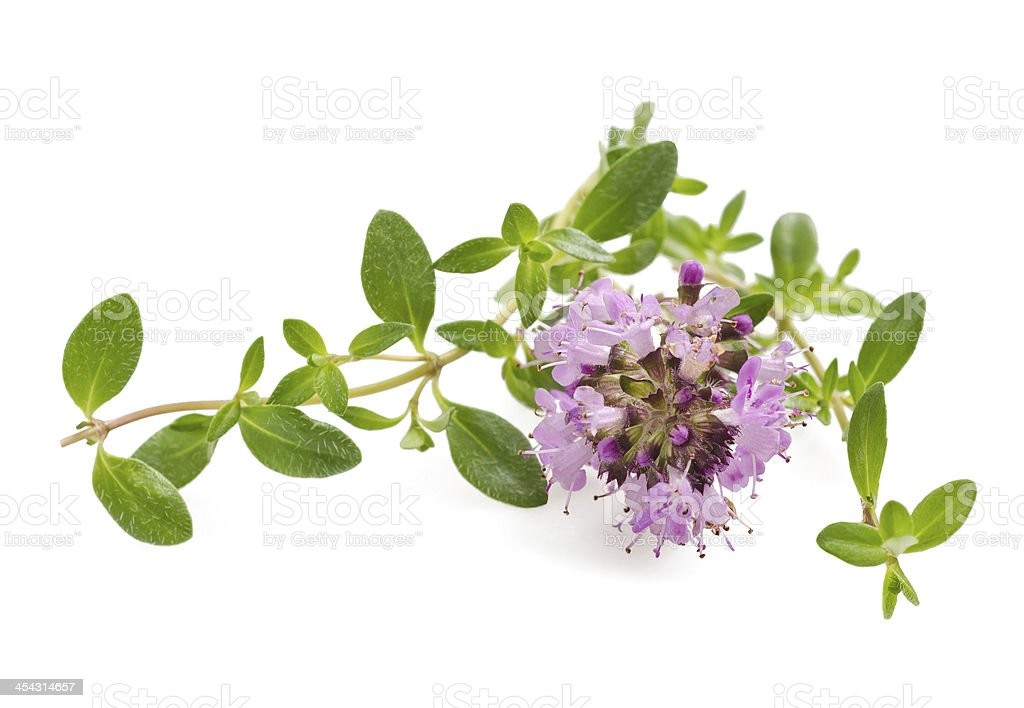 Thyme flowers stock photo