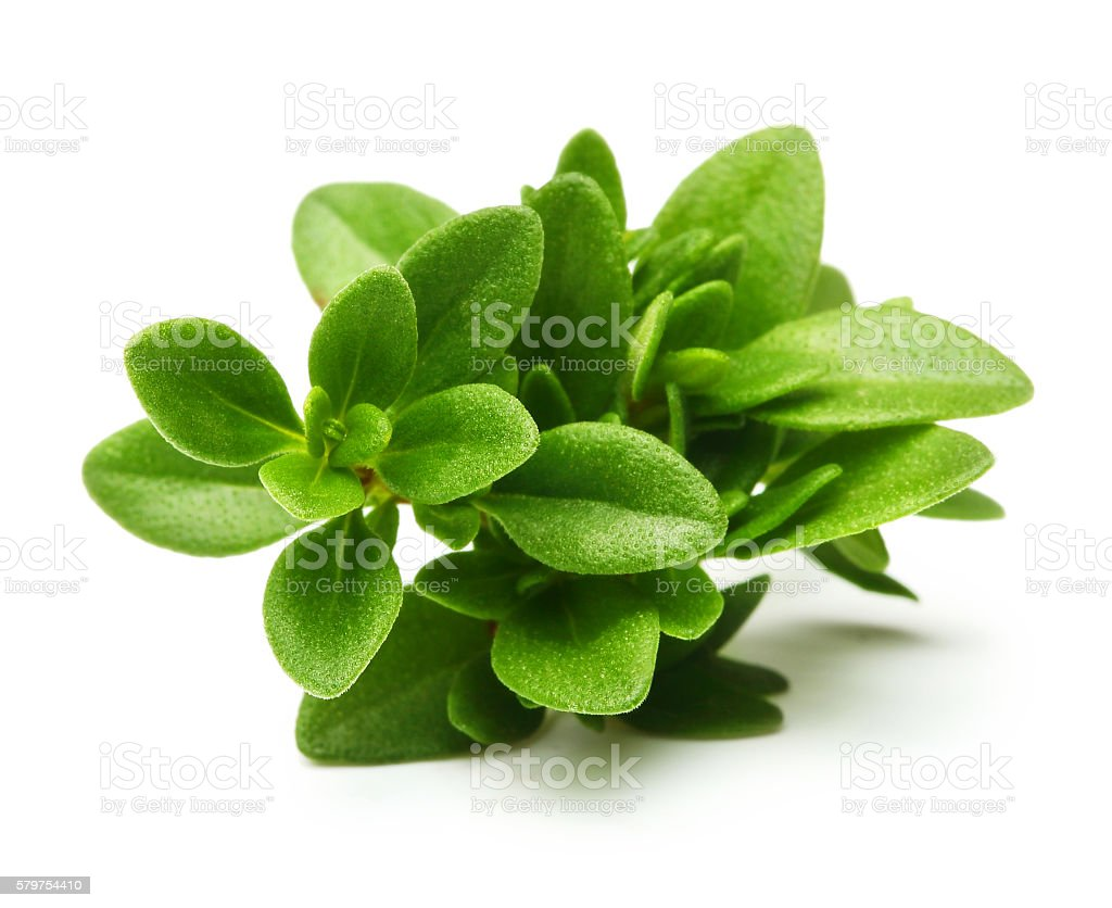 Thyme fresh herb isolated stock photo