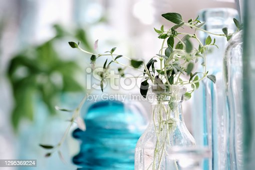 Sprigs of Thyme in an antique bottle on a windowsill.