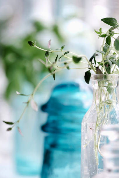 Thyme in a Bottle stock photo