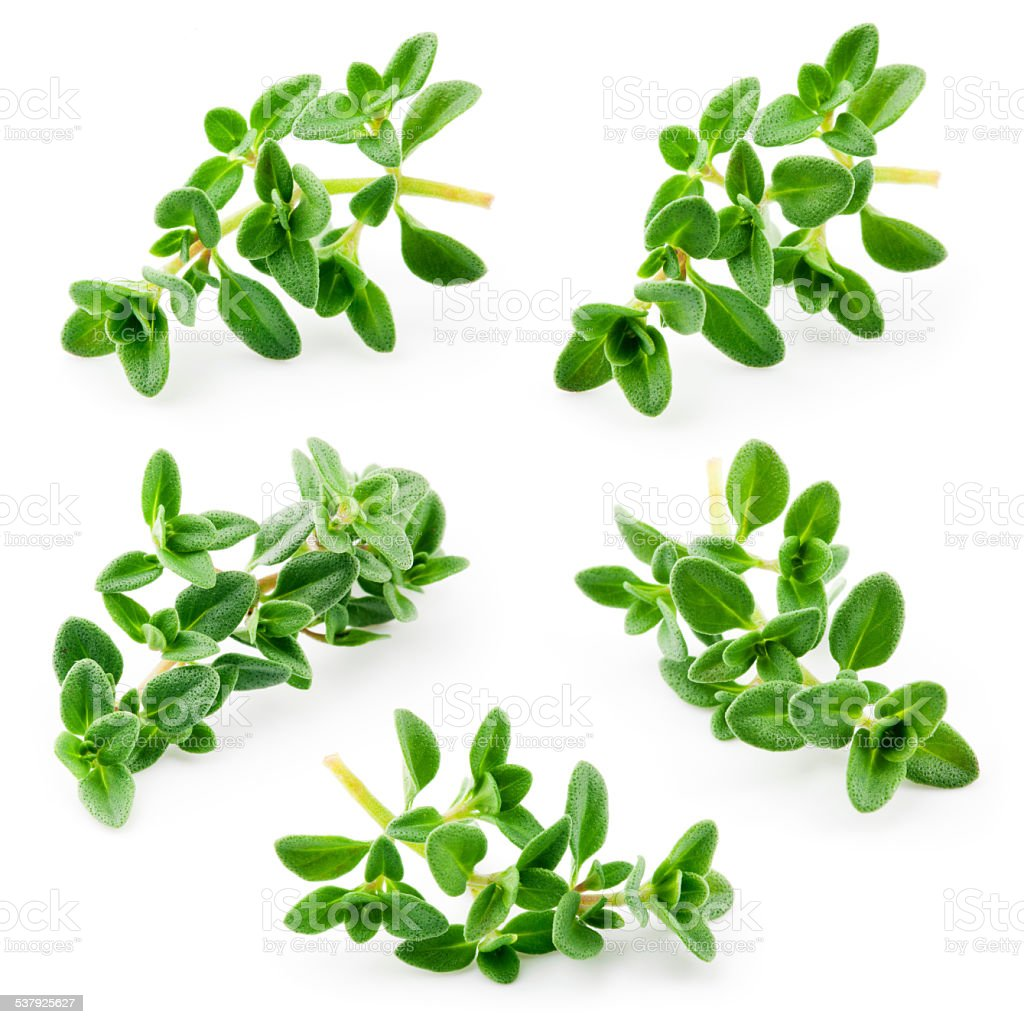 Thyme isolated on white background. Collection stock photo
