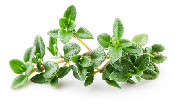 thyme isolated on white background. macro - thyme stock photos and pictures