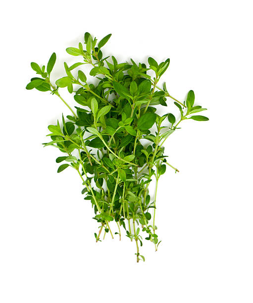 thyme isolated on white background stock photo