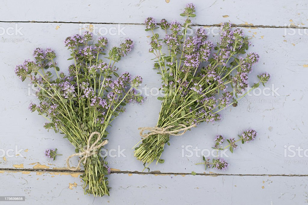 thyme royalty-free stock photo