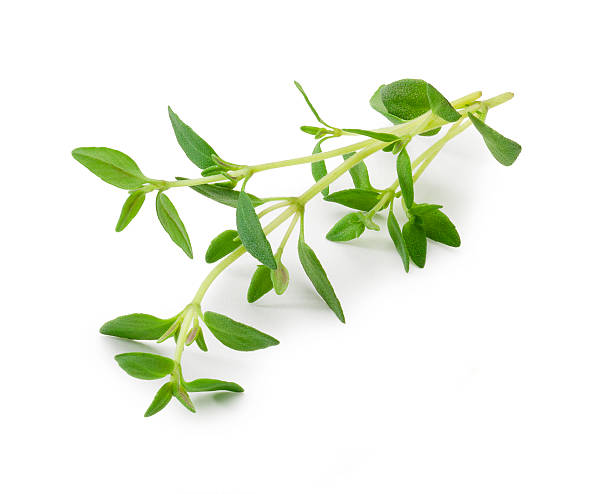 thyme - thyme stock photos and pictures