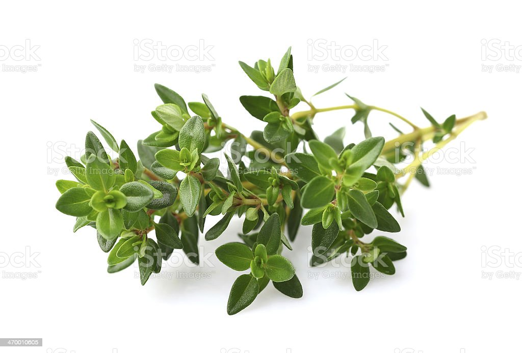 Thyme spice stock photo